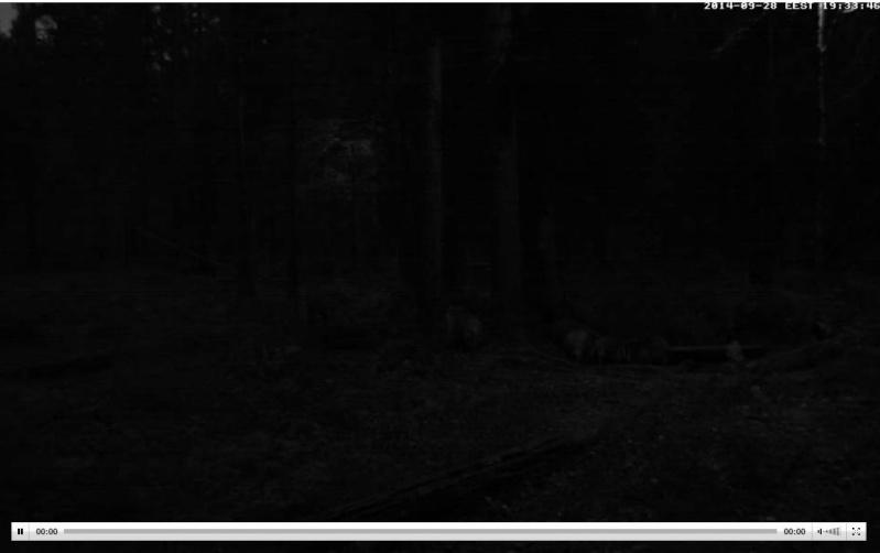 Wildtier-Livecams Wutz210