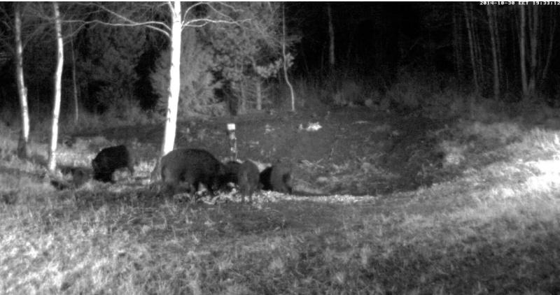 Wildtier-Livecams - Seite 3 Ww110