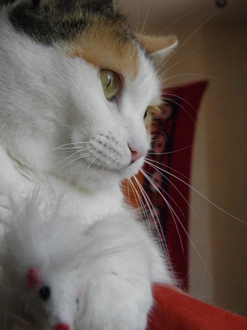Havana, rebaptisée Chihiro, jolie tricolre environ 2 ans du côté de Limoges - Page 5 P7271413