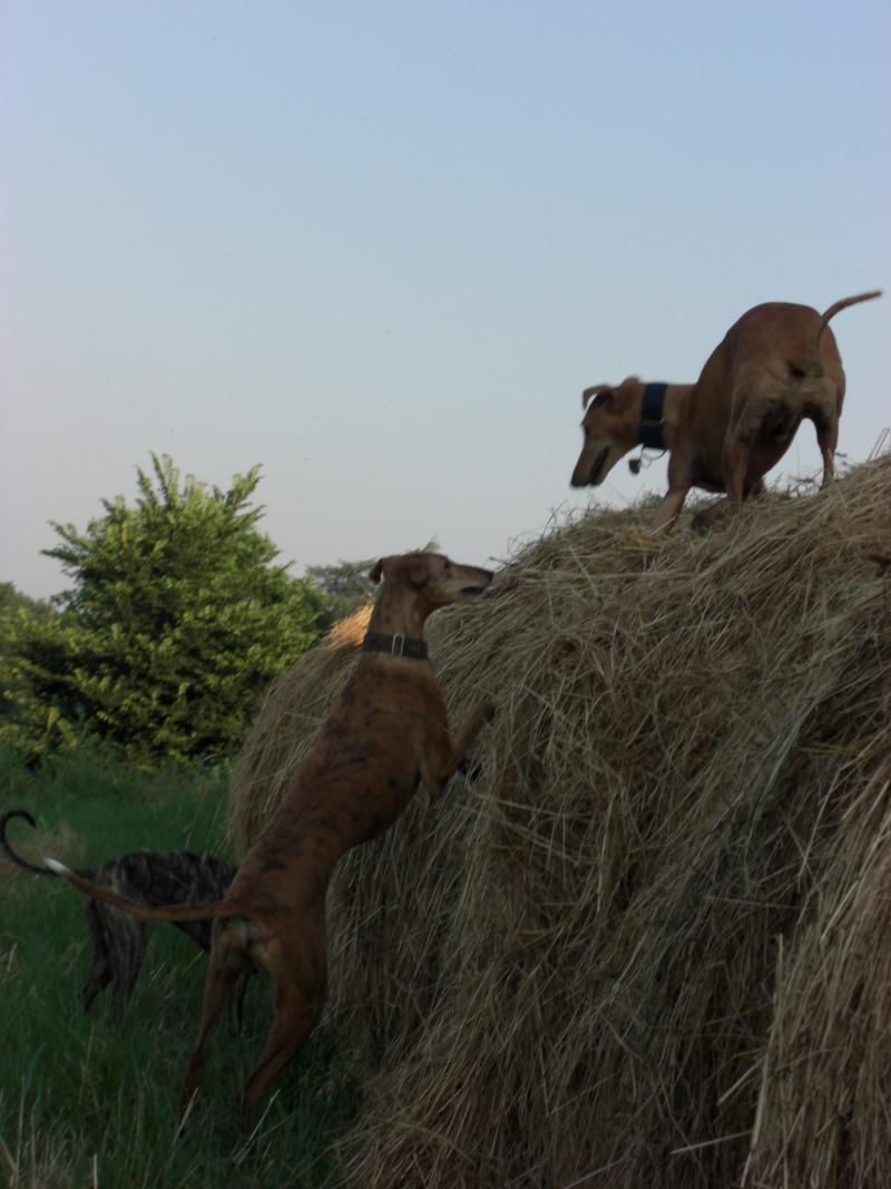 """Les"""" Doggies"""" de La Rive - Page 5 Haye_n12"""