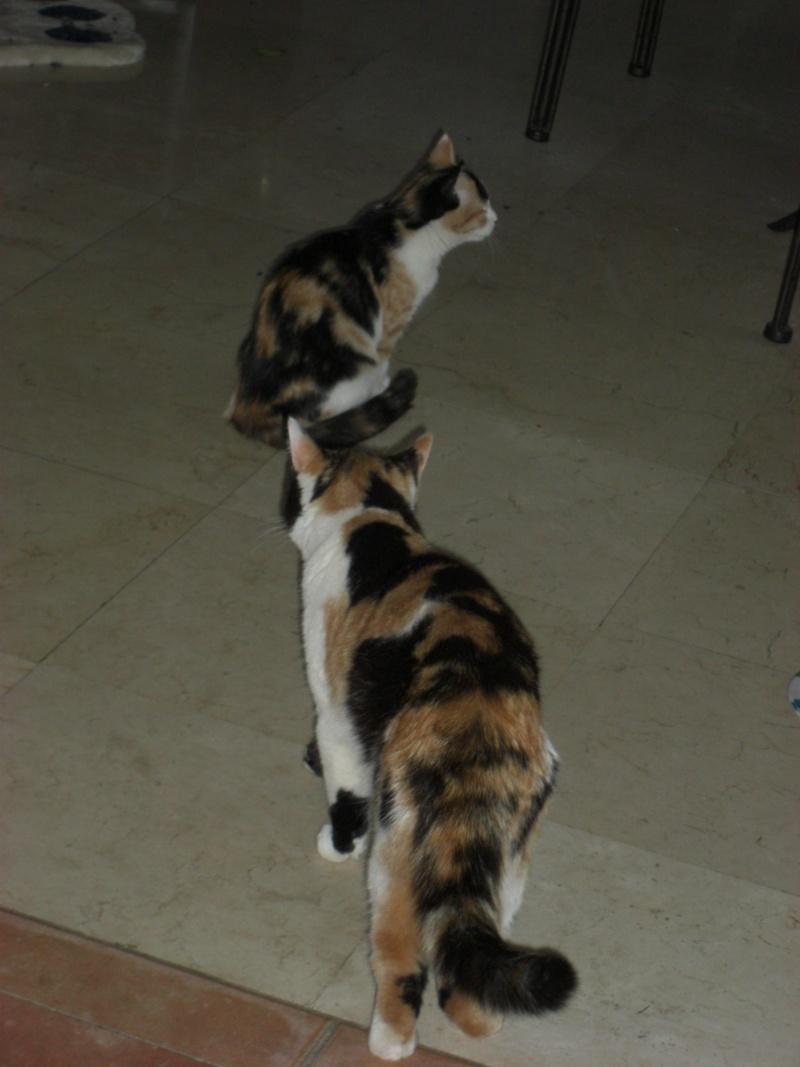 Les 4 nelles tornades de La Rive (Josiane) Nov_2010