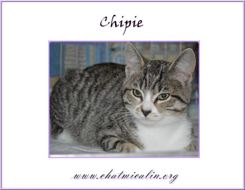 Tous nos adoptés en image Chipie10