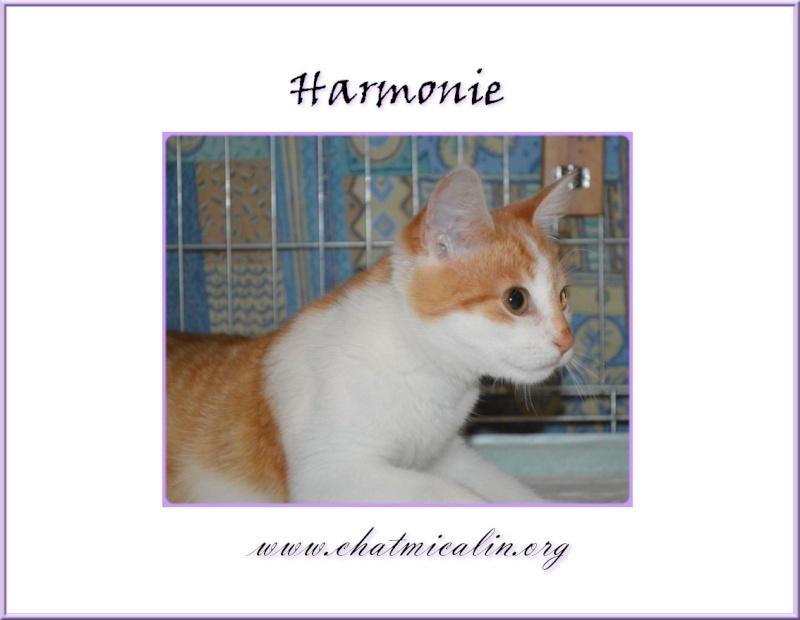 Tous nos adoptés en image Harmon10