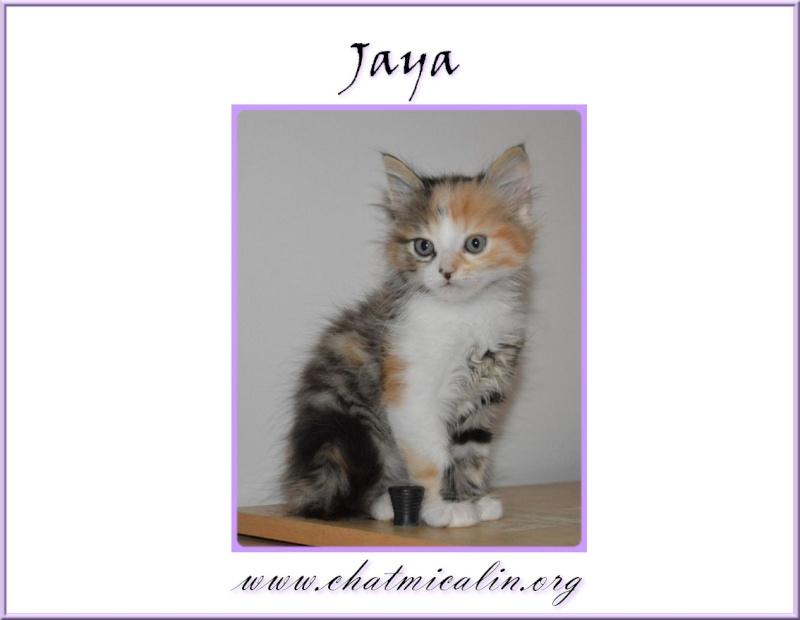Tous nos adoptés en image Jaya__10