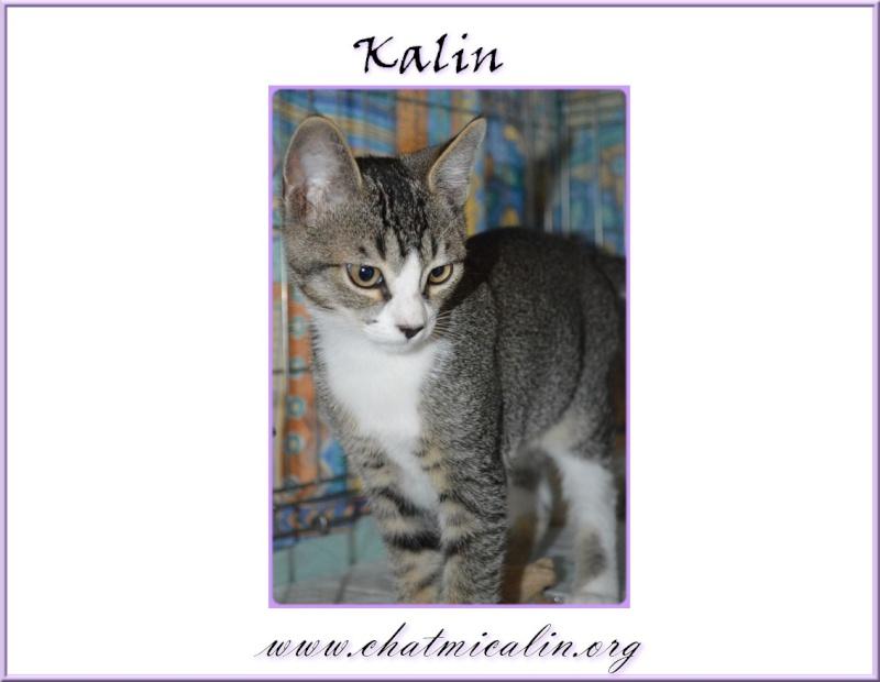 Tous nos adoptés en image Kalin_10