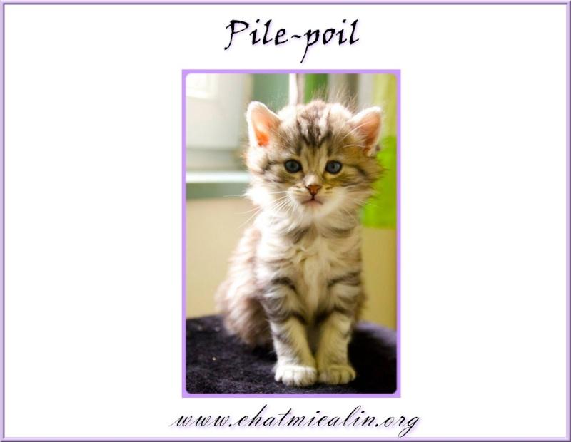 Tous nos adoptés en image Pile-p11
