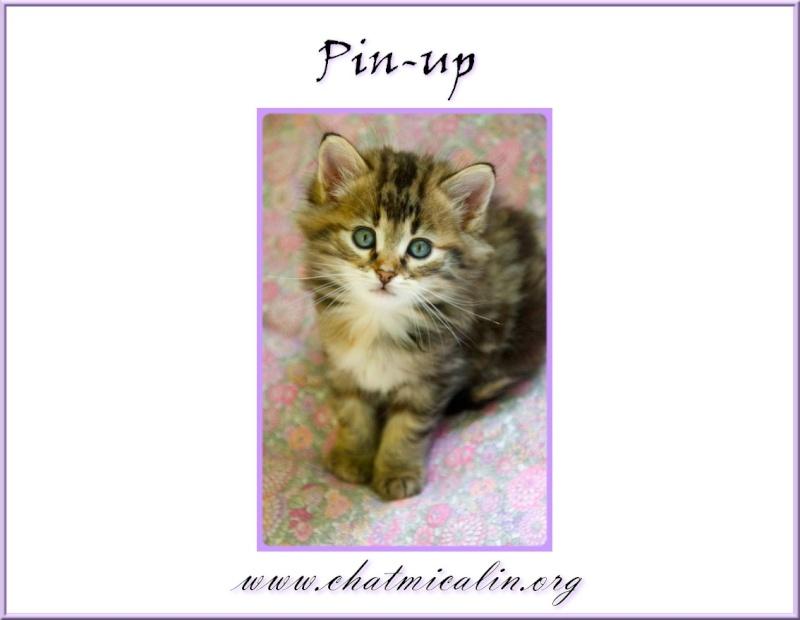 Tous nos adoptés en image Pin-up11