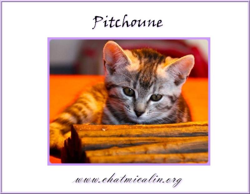 Tous nos adoptés en image Pitcho10