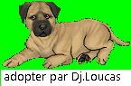 theme Septembre 1012 ( loup beige ) Lyyyg210