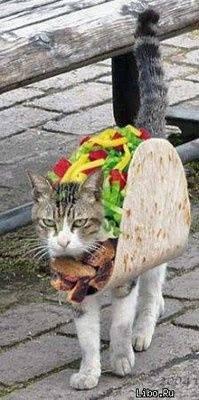 Hilarious pet costume 10406310