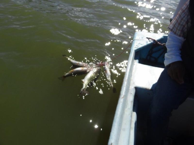 Aguamilpa fishing report - Dec 2014 Dsc06115