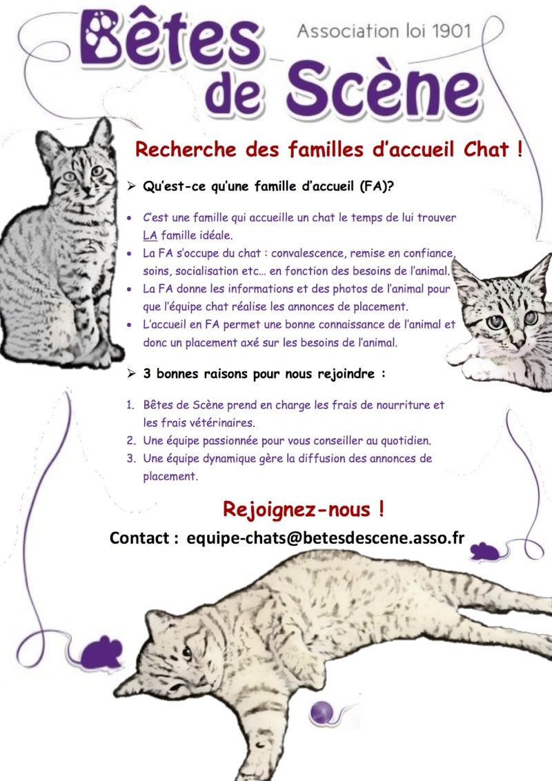 L'association Bêtes de scène 35 recherche des familles d'accueil Chat !   Affich10