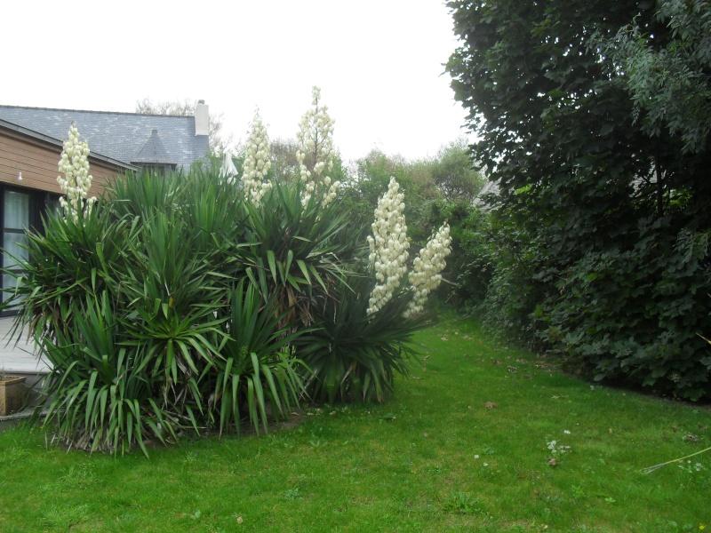 L'aloes du jardin de ma grand mère.... 00121
