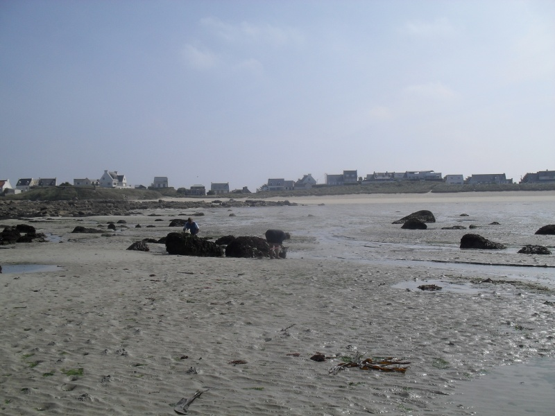 Jour de grande marée : la pêche à la crevette. 00317