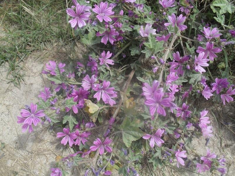 Fleurs ... tout simplement - Page 37 00710