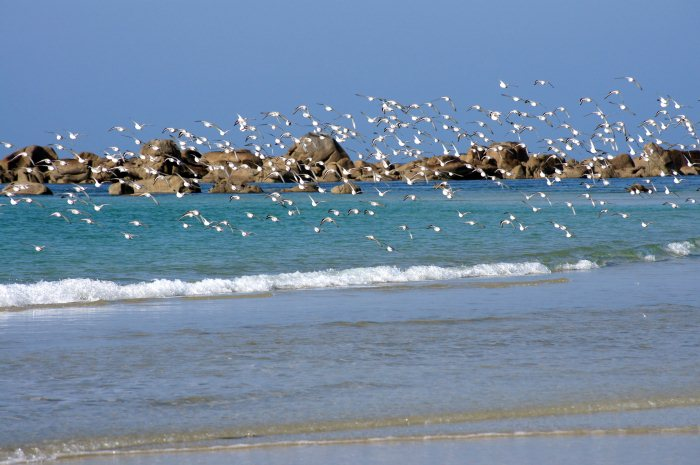 Animaux, oiseaux... etc. tout simplement ! - Page 5 724710