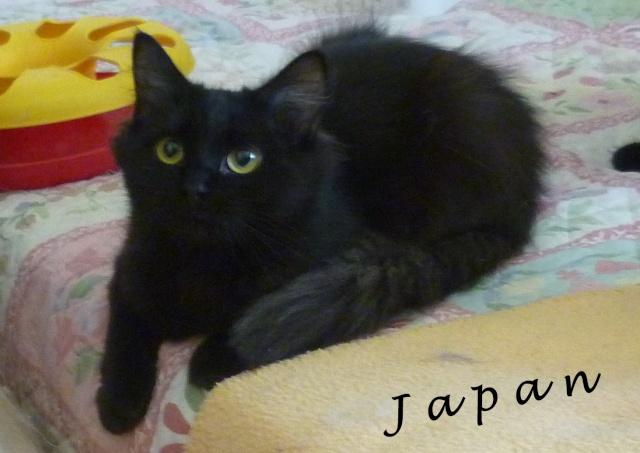 JAPAN  P1020110