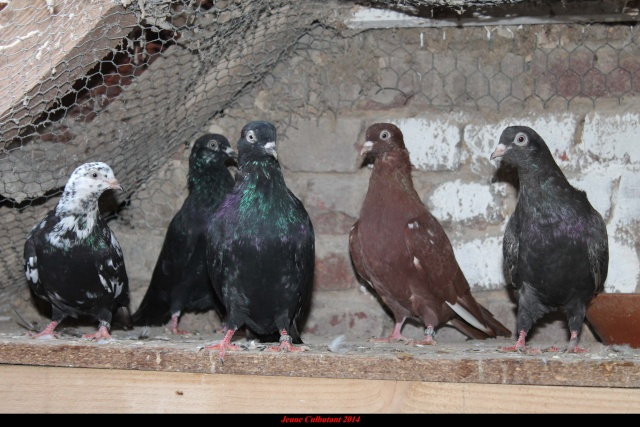 Mes pigeons - Page 2 Img_0512
