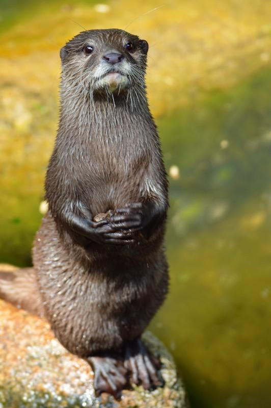 Zusammenhang zwischen Otter, Giraffe & Trampeltier? Fischo10