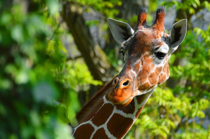 Zusammenhang zwischen Otter, Giraffe & Trampeltier? Netzgi10