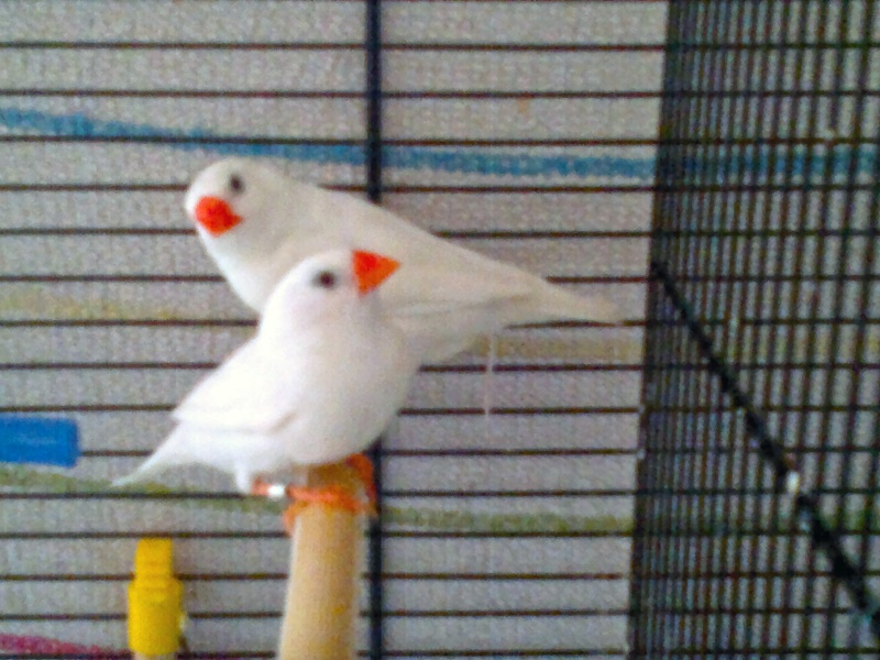 Mes Oiseaux ...... 19112010