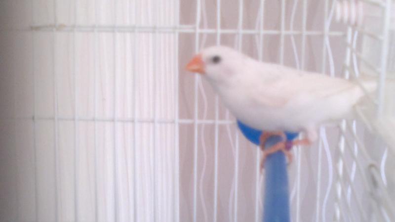 Mes Oiseaux ...... 25102010
