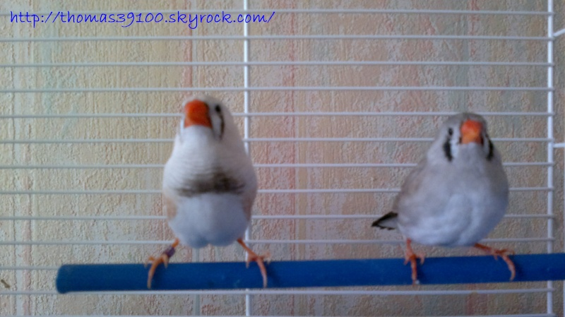 Mes Oiseaux ...... 27022010