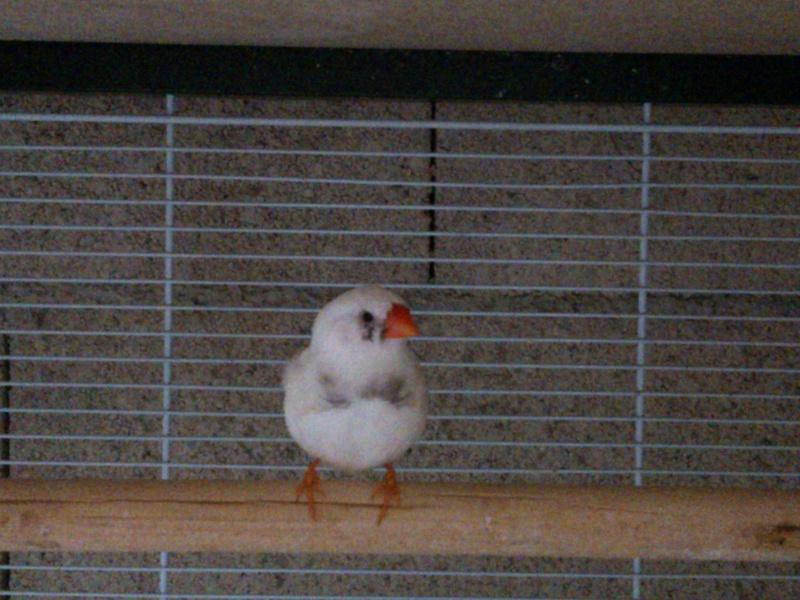Mes Oiseaux ...... Wp_00011