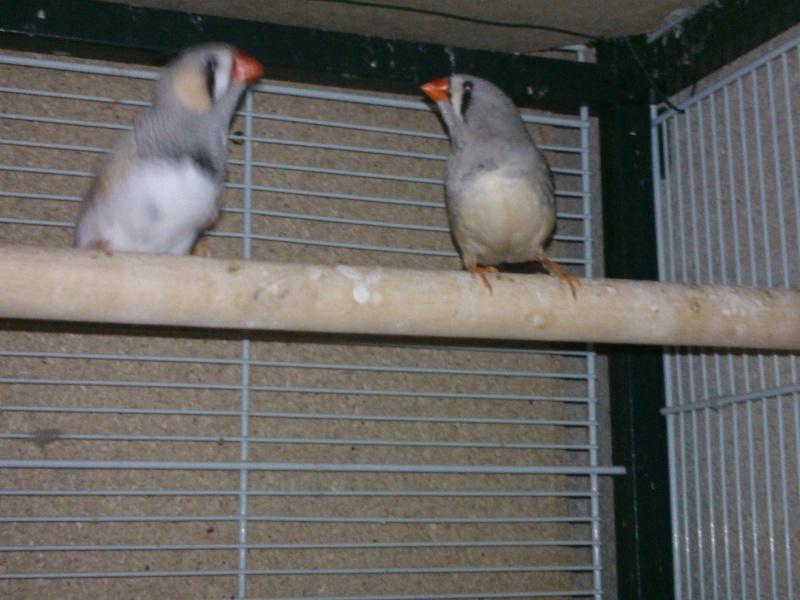Mes Oiseaux ...... Wp_00012
