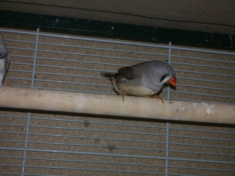 Mes Oiseaux ...... Wp_00013