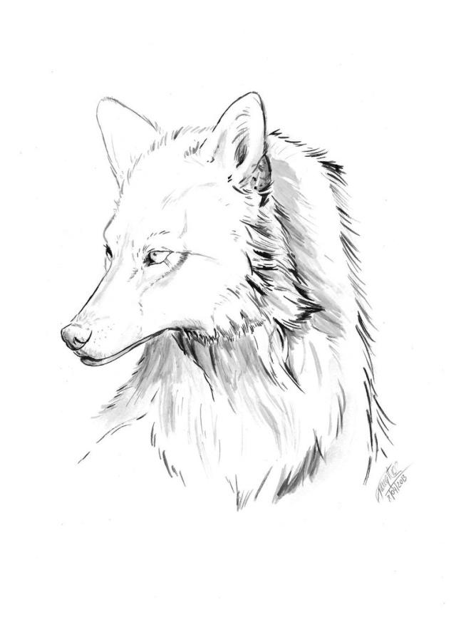 Dessin 2.0 Wolf_b10