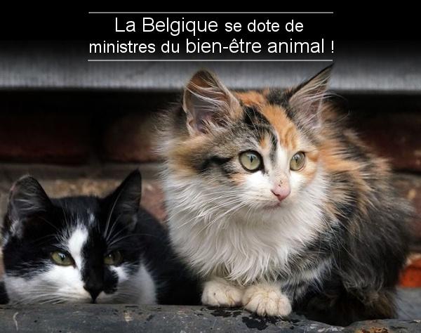 Ministre du bien-être animal (Belgique) Btfjva10
