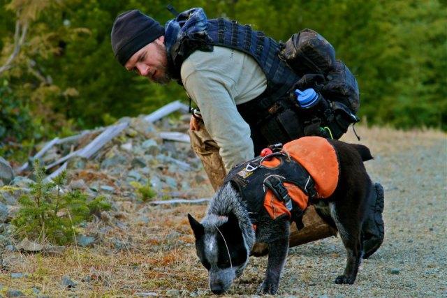 Des chiens au secours des espèces menacées Ck9510