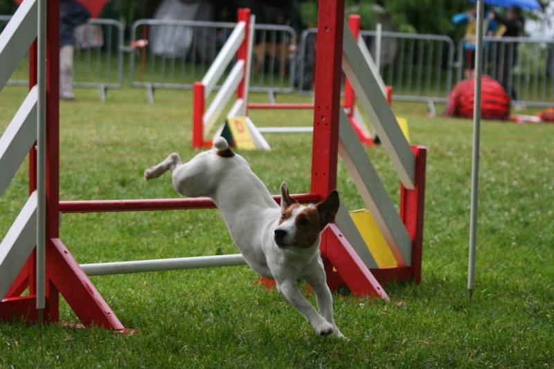 Concours d'agility à Chambéry  juillet 2012 Img_7911