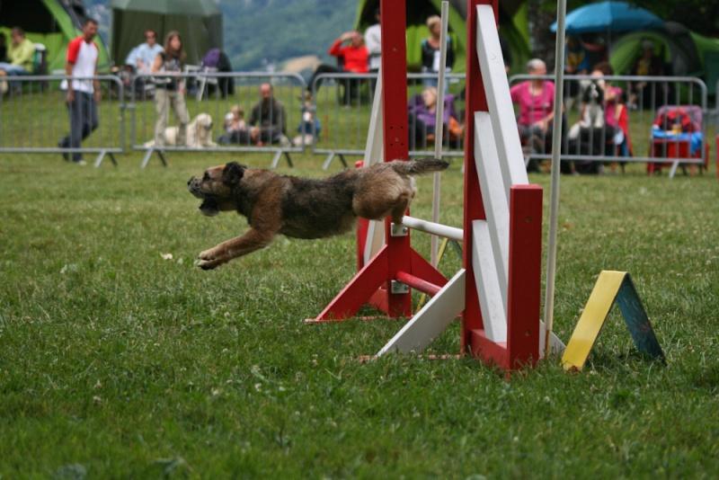 Concours d'agility à Chambéry  juillet 2012 Img_8110