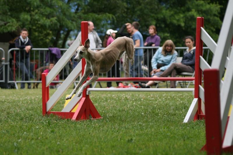 Concours d'agility à Chambéry  juillet 2012 Img_8210