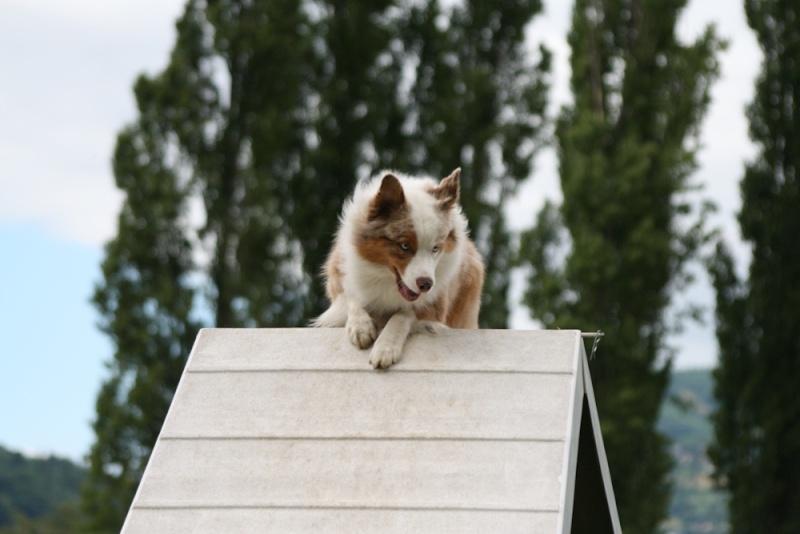 Concours d'agility à Chambéry  juillet 2012 Img_8510