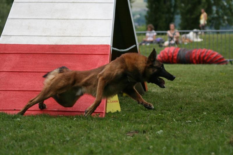Concours d'agility à Chambéry  juillet 2012 Img_8610