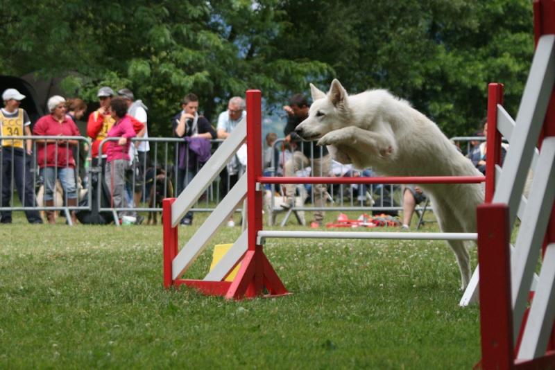 Concours d'agility à Chambéry  juillet 2012 Img_8611