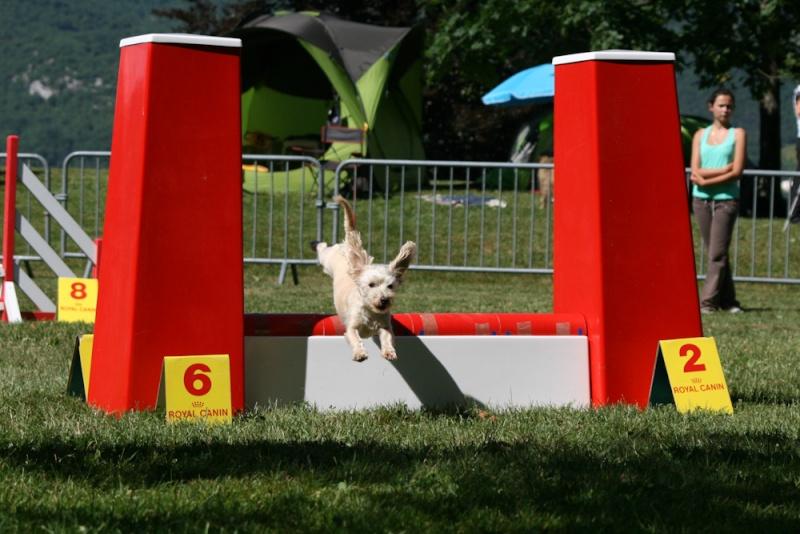 Concours d'agility à Chambéry  juillet 2012 Img_8810