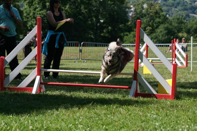 Concours d'agility à Chambéry  juillet 2012 Img_8812