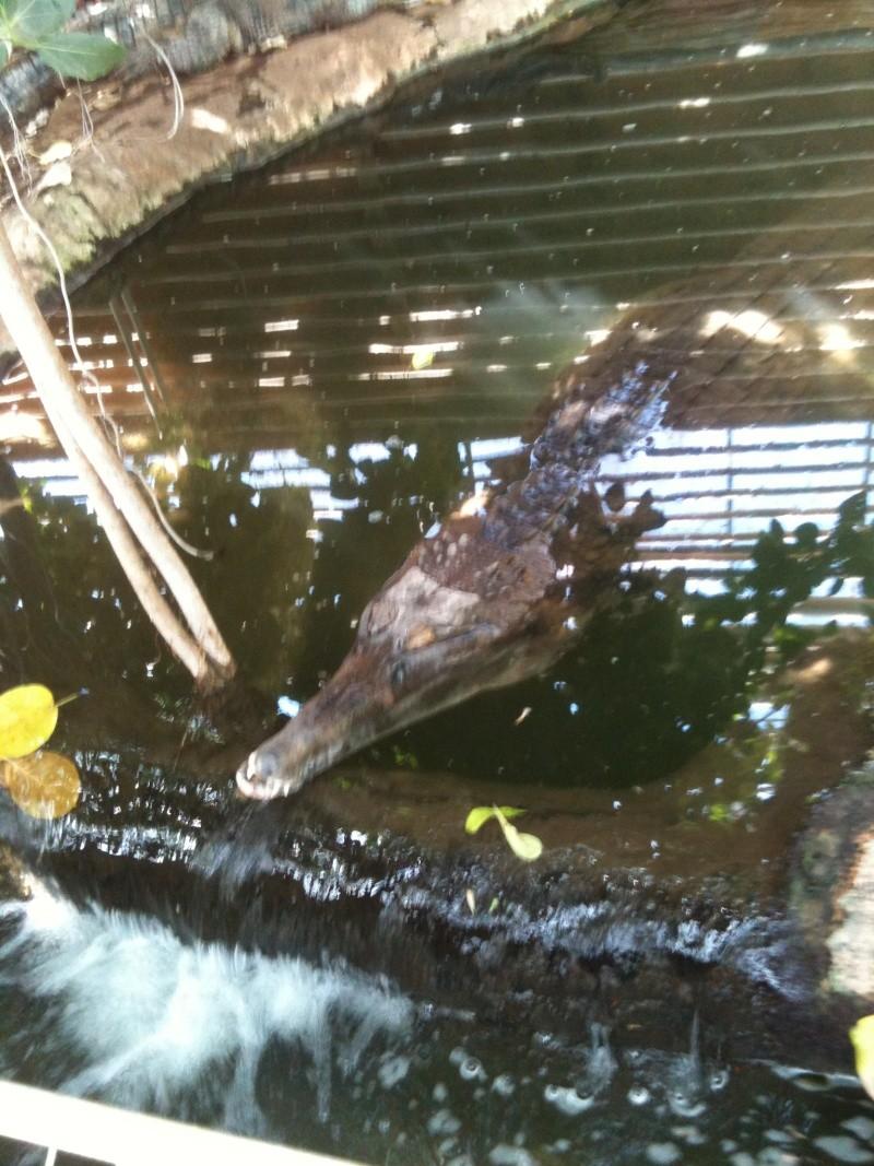 ferme aux crocodiles Yc_03911