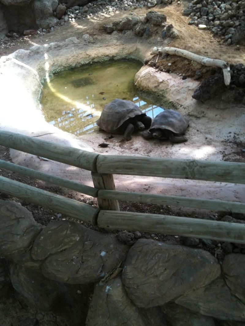 ferme aux crocodiles Yc_06310