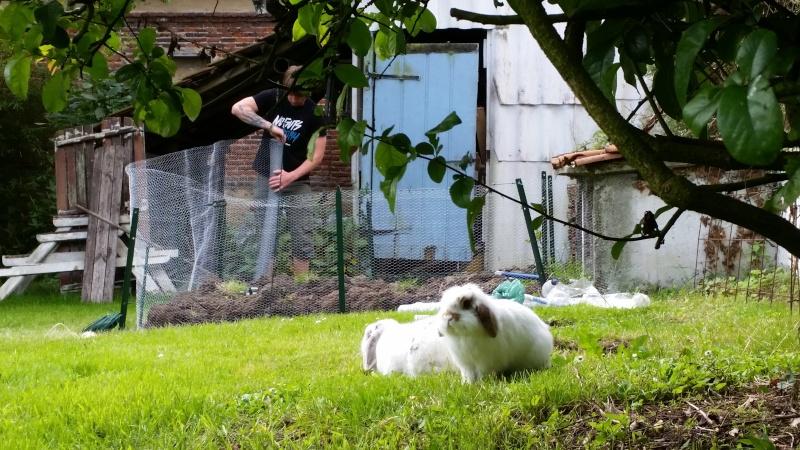 lilou, lapine bélier née en avril 2011 - Page 4 20140610