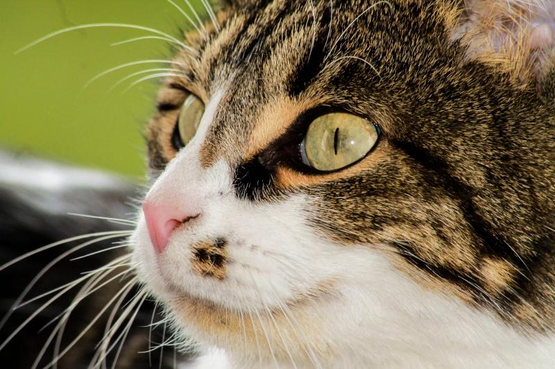 Photographie de chiens & chats Img_2013