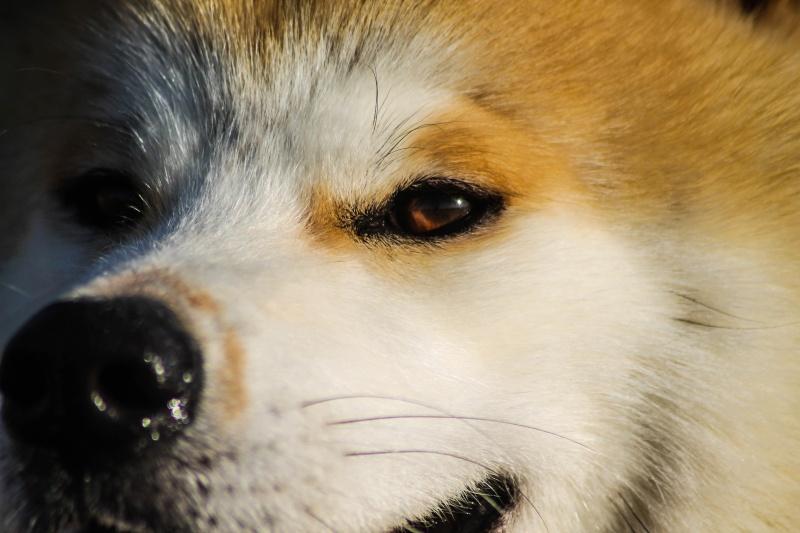 Photographie de chiens & chats Img_2711