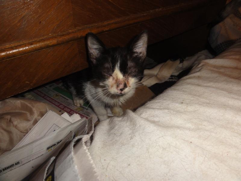 Parrainage des chats de Mme Angela Dsc00214