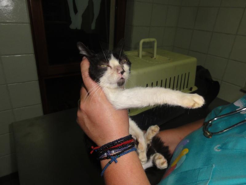 Parrainage des chats de Mme Angela Dsc00410