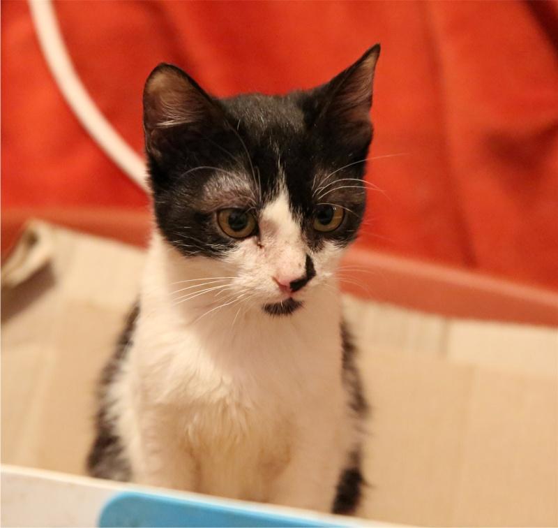Parrainage des chats de Mme Angela Hx9a4214