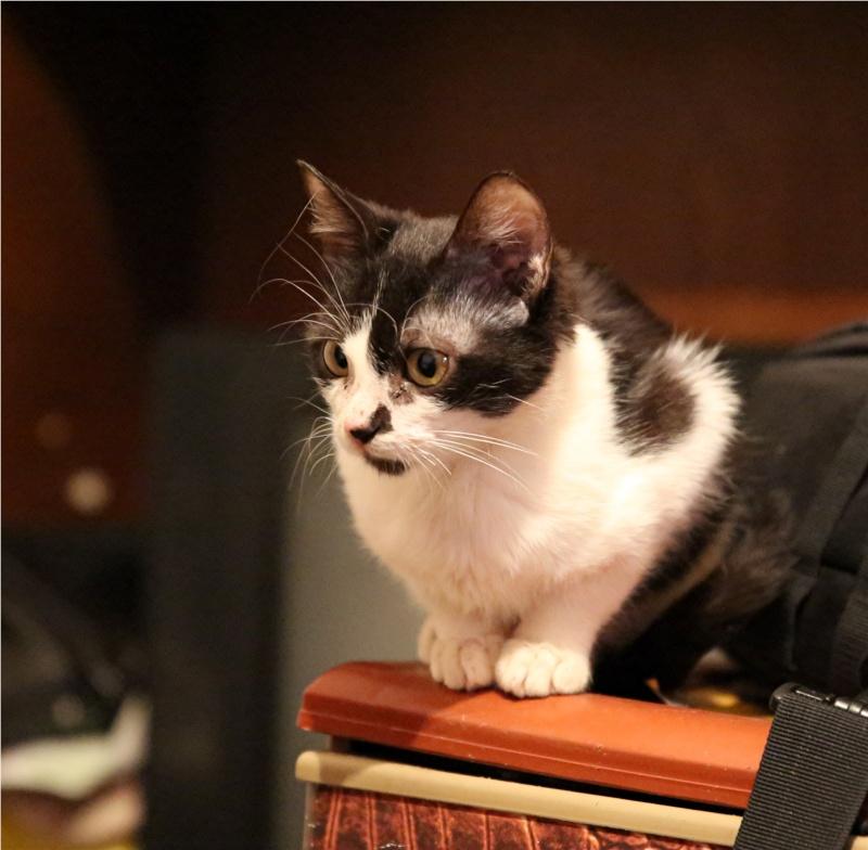Parrainage des chats de Mme Angela Hx9a4215